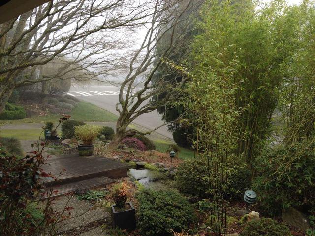 tuyet-foggy-day